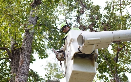 Picture of an employee in Canton, OH to trim a large tree for a customer.
