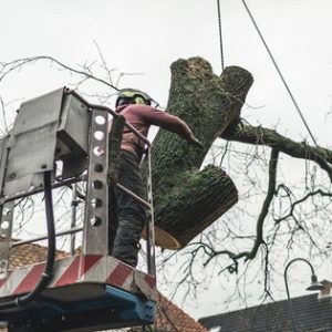 Picture of a employee cutting down a large tree in a bucket truck using a large crane in Canton, OH.
